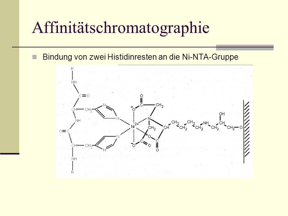 Affinitätschromatographie Bindung von zwei Histidinresten an die Ni-NTA-Gruppe