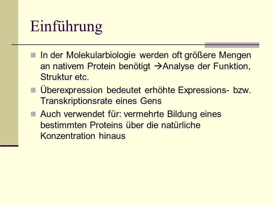 Einführung In der Molekularbiologie werden oft größere Mengen an nativem Protein benötigt Analyse der Funktion, Struktur etc. Überexpression bedeutet