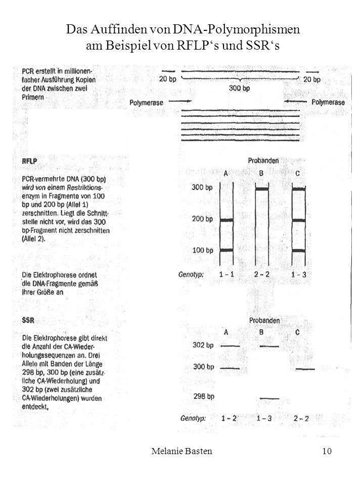 Melanie Basten10 Das Auffinden von DNA-Polymorphismen am Beispiel von RFLPs und SSRs