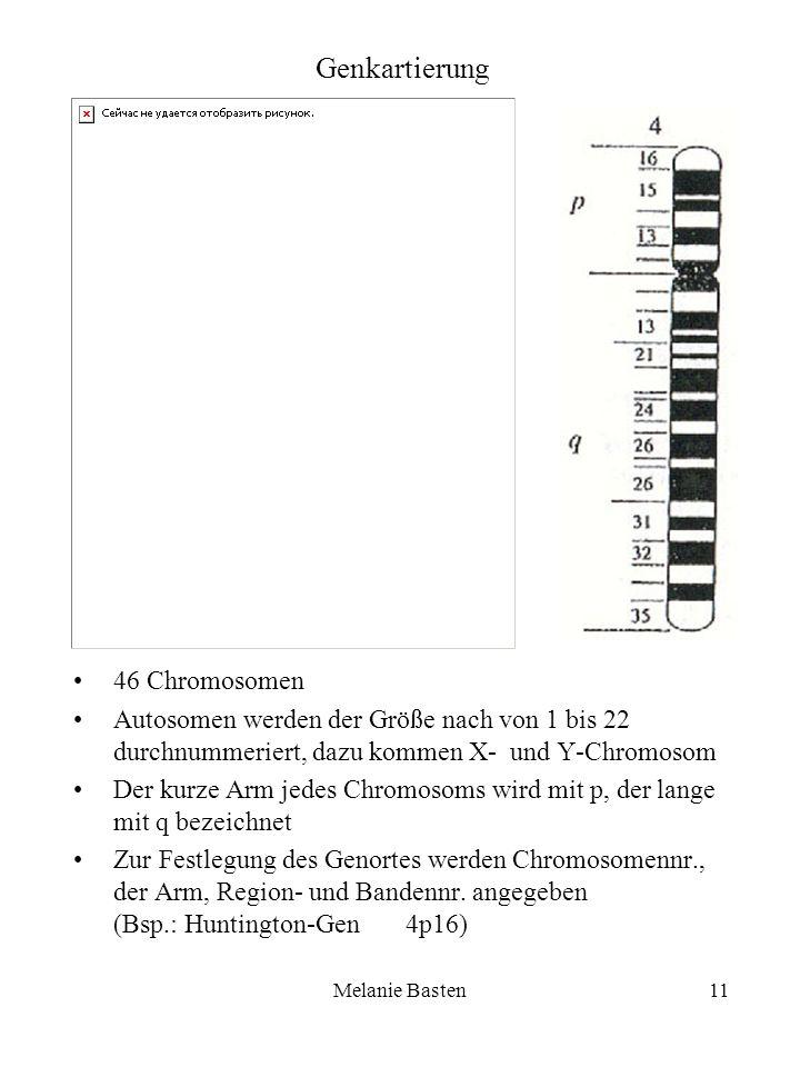 Melanie Basten11 Genkartierung 46 Chromosomen Autosomen werden der Größe nach von 1 bis 22 durchnummeriert, dazu kommen X- und Y-Chromosom Der kurze A
