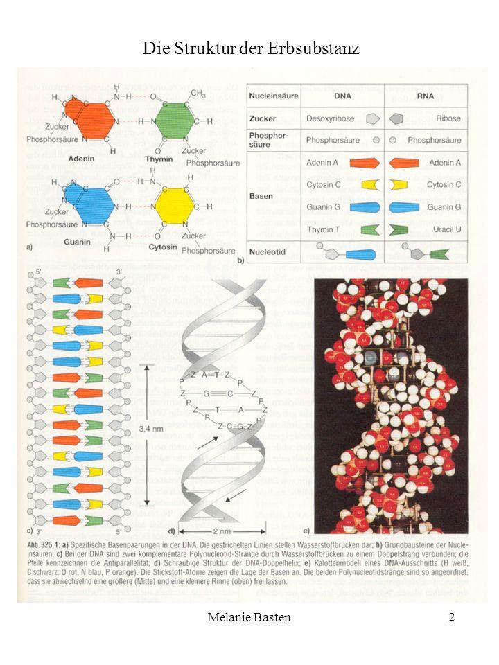 Melanie Basten2 Die Struktur der Erbsubstanz