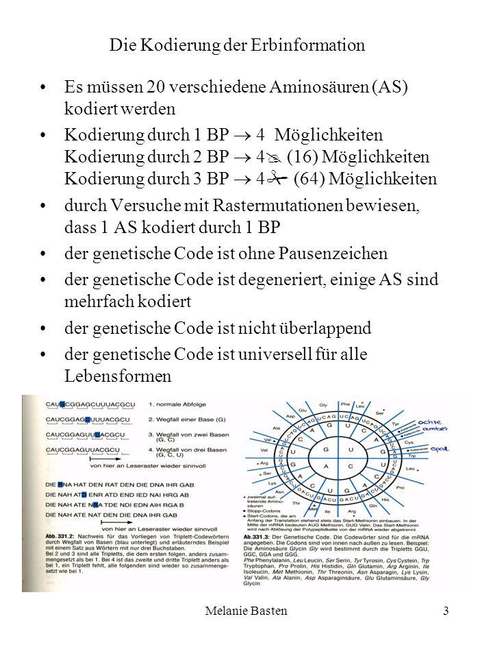 Melanie Basten3 Es müssen 20 verschiedene Aminosäuren (AS) kodiert werden Kodierung durch 1 BP 4 Möglichkeiten Kodierung durch 2 BP 4 (16) Möglichkeit