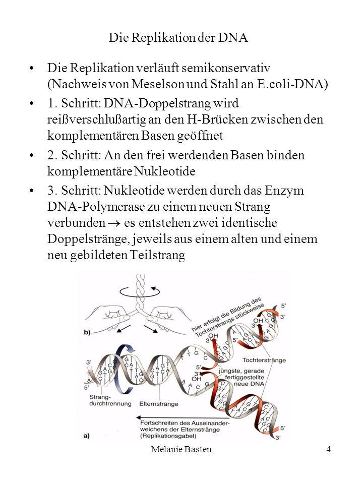 Melanie Basten4 Die Replikation der DNA Die Replikation verläuft semikonservativ (Nachweis von Meselson und Stahl an E.coli-DNA) 1. Schritt: DNA-Doppe