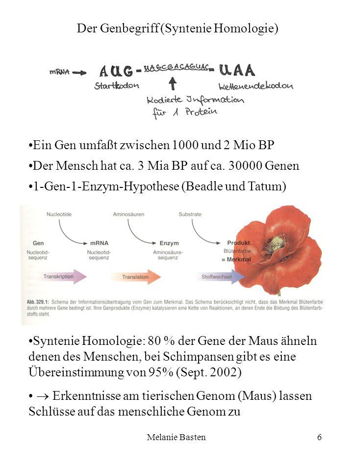 Melanie Basten6 Der Genbegriff (Syntenie Homologie) Ein Gen umfaßt zwischen 1000 und 2 Mio BP Der Mensch hat ca. 3 Mia BP auf ca. 30000 Genen 1-Gen-1-