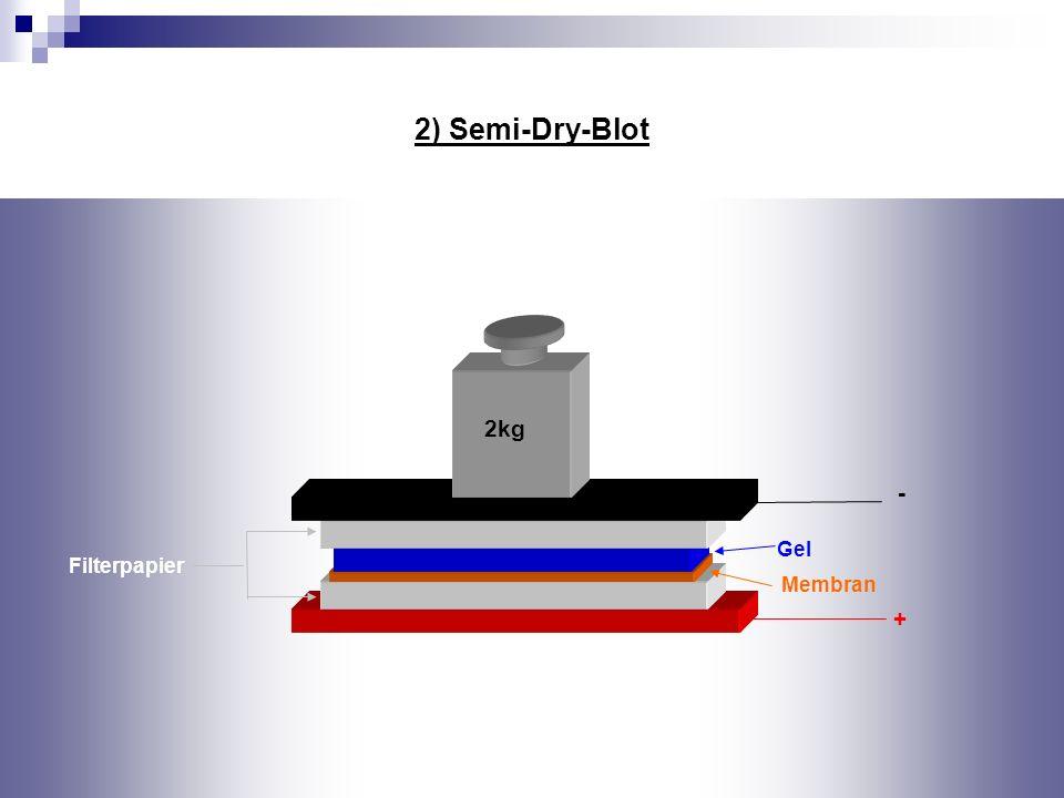 + - Membran 2) Semi-Dry-Blot 2kg Gel Filterpapier