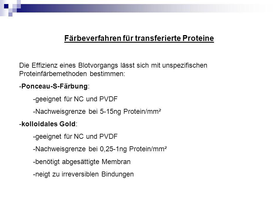 Färbeverfahren für transferierte Proteine Die Effizienz eines Blotvorgangs lässt sich mit unspezifischen Proteinfärbemethoden bestimmen: -Ponceau-S-Fä