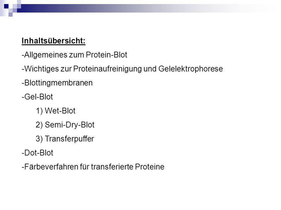 Inhaltsübersicht: -Allgemeines zum Protein-Blot -Wichtiges zur Proteinaufreinigung und Gelelektrophorese -Blottingmembranen -Gel-Blot 1) Wet-Blot 2) S