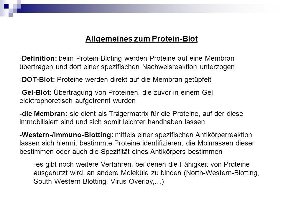 Allgemeines zum Protein-Blot -Definition: beim Protein-Bloting werden Proteine auf eine Membran übertragen und dort einer spezifischen Nachweisreaktio
