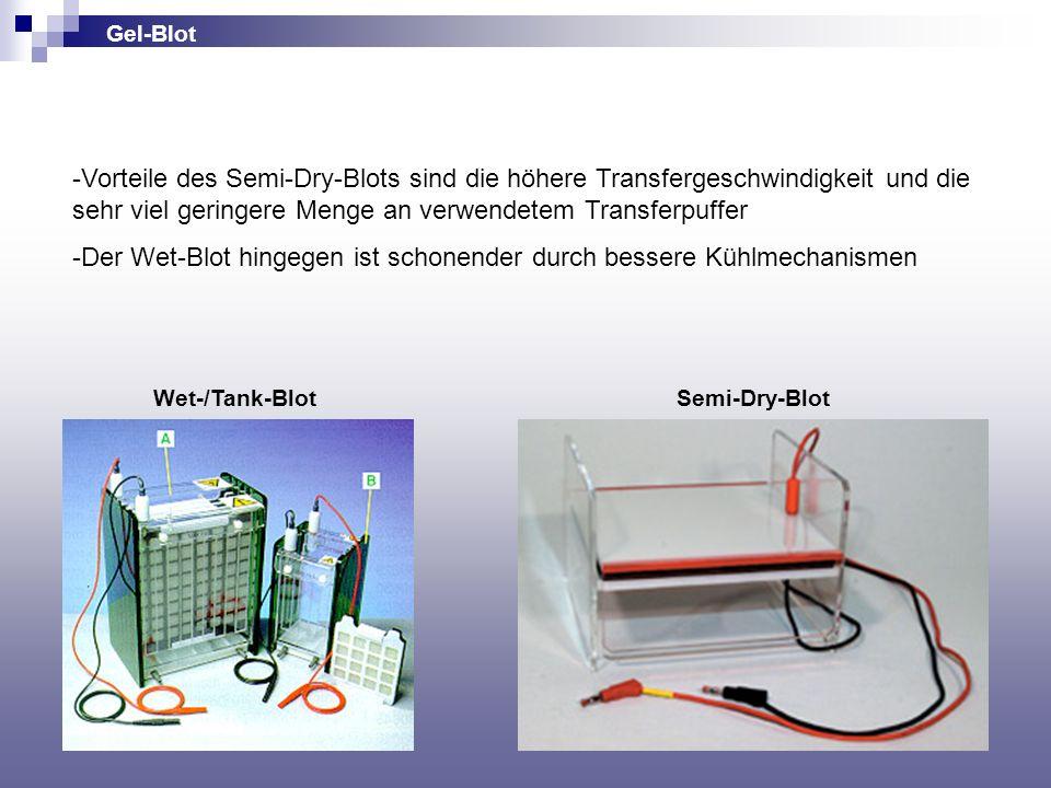 Gel-Blot Wet-/Tank-BlotSemi-Dry-Blot -Vorteile des Semi-Dry-Blots sind die höhere Transfergeschwindigkeit und die sehr viel geringere Menge an verwend