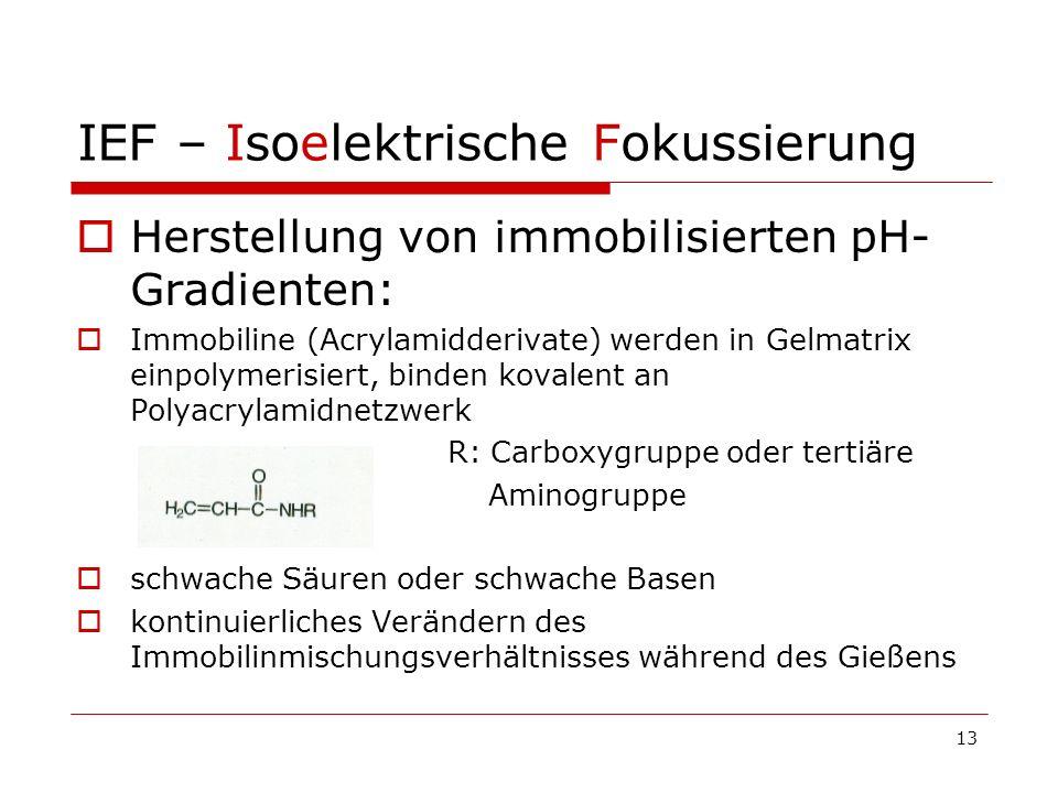 13 IEF – Isoelektrische Fokussierung Herstellung von immobilisierten pH- Gradienten: Immobiline (Acrylamidderivate) werden in Gelmatrix einpolymerisie