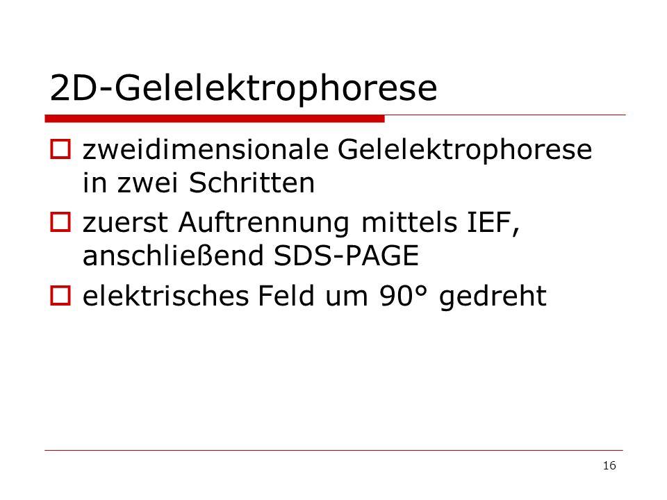 16 2D-Gelelektrophorese zweidimensionale Gelelektrophorese in zwei Schritten zuerst Auftrennung mittels IEF, anschließend SDS-PAGE elektrisches Feld u
