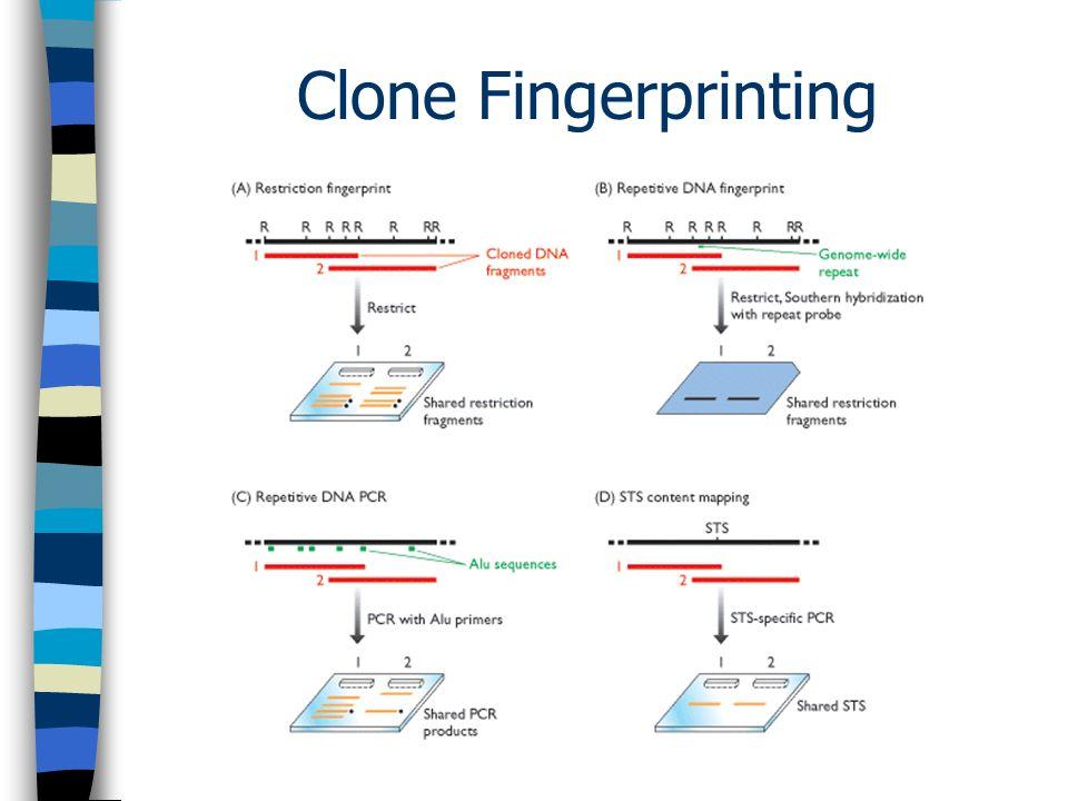 Clone Fingerprinting