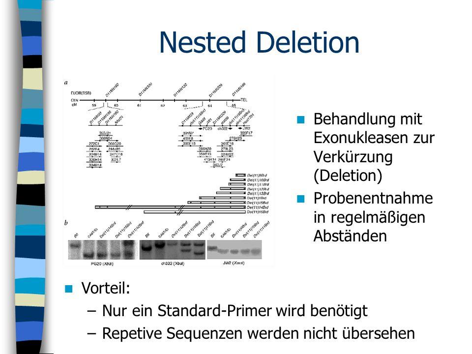 Nested Deletion Behandlung mit Exonukleasen zur Verkürzung (Deletion) Probenentnahme in regelmäßigen Abständen Vorteil: –Nur ein Standard-Primer wird