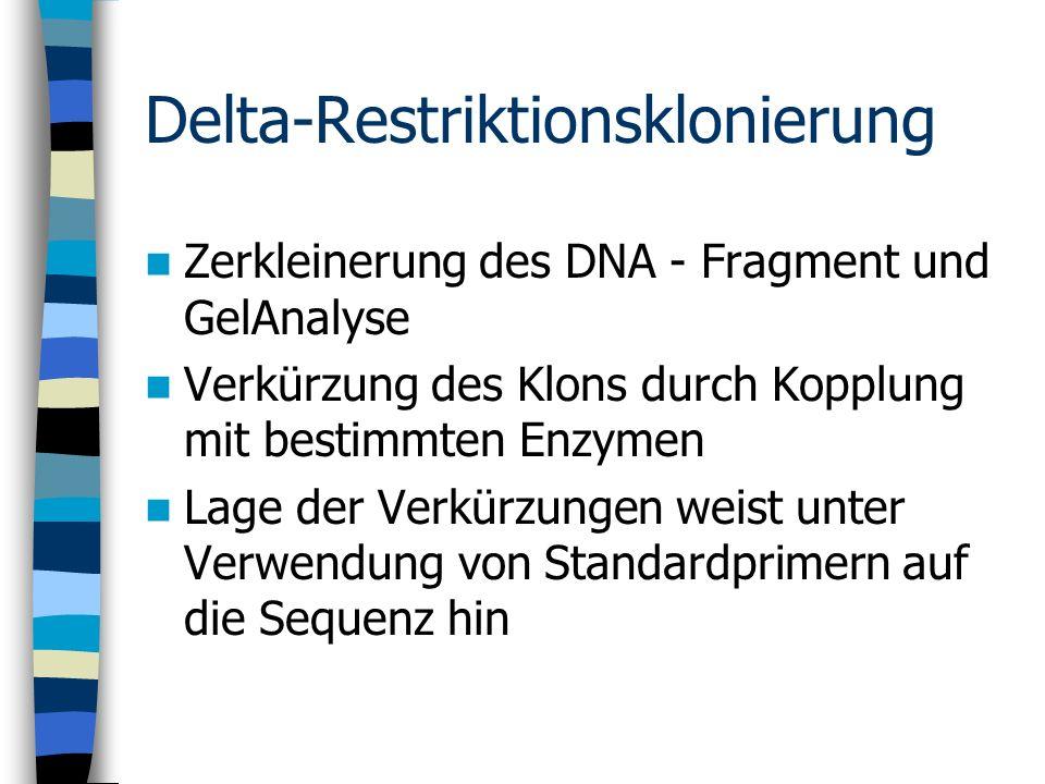 Delta-Restriktionsklonierung Zerkleinerung des DNA - Fragment und GelAnalyse Verkürzung des Klons durch Kopplung mit bestimmten Enzymen Lage der Verkü