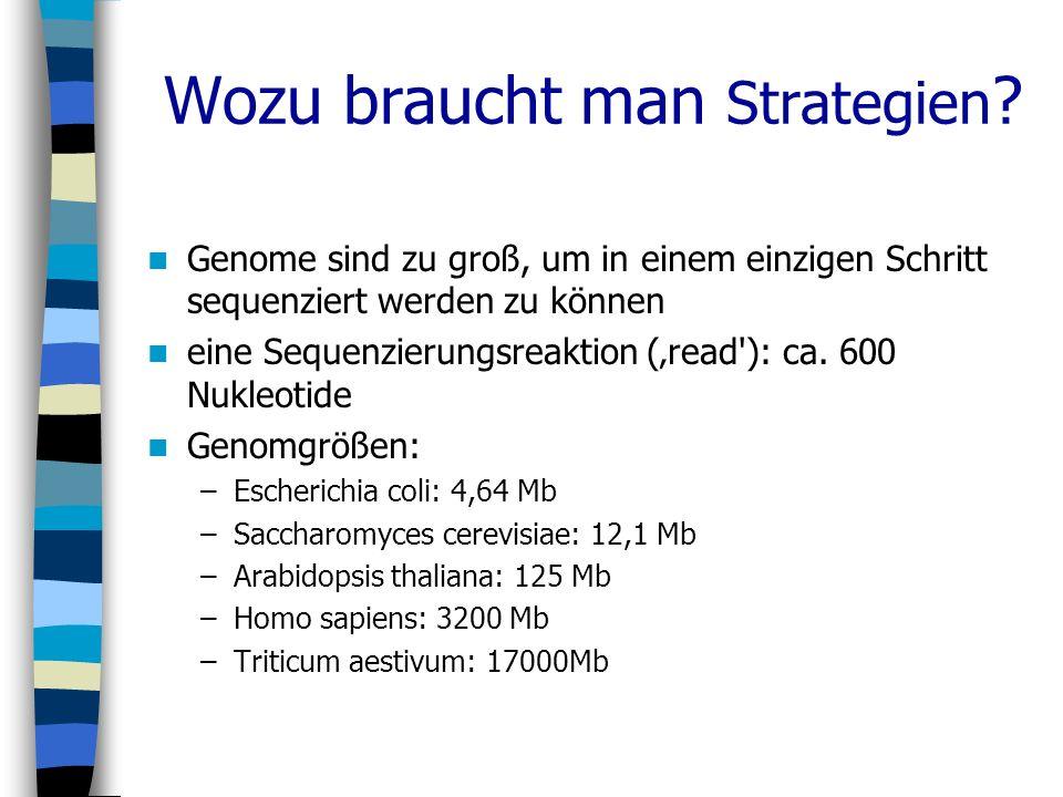 Wozu braucht man Strategien ? Genome sind zu groß, um in einem einzigen Schritt sequenziert werden zu können eine Sequenzierungsreaktion (read'): ca.