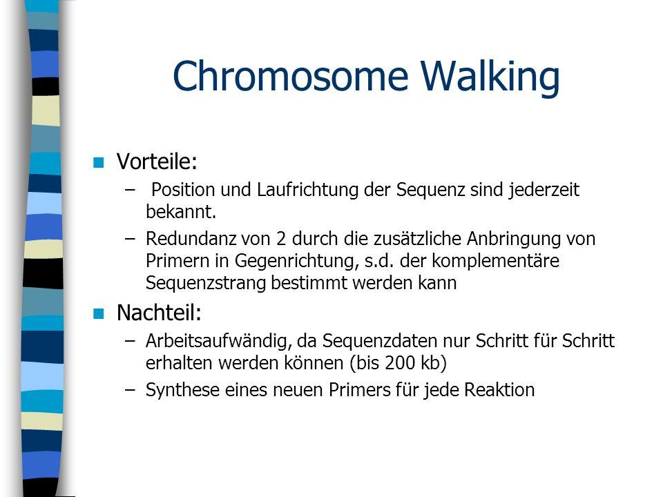 Chromosome Walking Vorteile: – Position und Laufrichtung der Sequenz sind jederzeit bekannt. –Redundanz von 2 durch die zusätzliche Anbringung von Pri