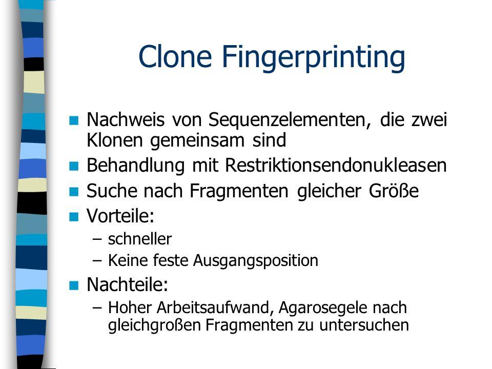 Clone Fingerprinting Nachweis von Sequenzelementen, die zwei Klonen gemeinsam sind Behandlung mit Restriktionsendonukleasen Suche nach Fragmenten glei
