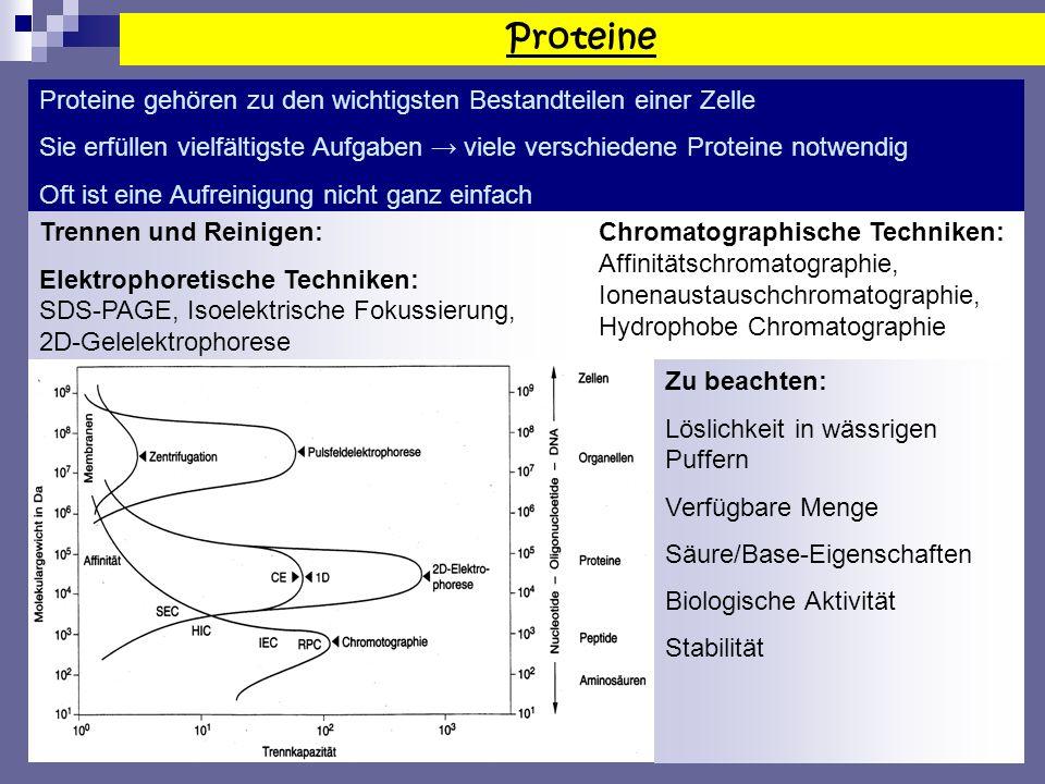 Proteine Proteine gehören zu den wichtigsten Bestandteilen einer Zelle Sie erfüllen vielfältigste Aufgaben viele verschiedene Proteine notwendig Oft ist eine Aufreinigung nicht ganz einfach Trennen und Reinigen: Elektrophoretische Techniken: SDS-PAGE, Isoelektrische Fokussierung, 2D-Gelelektrophorese Chromatographische Techniken: Affinitätschromatographie, Ionenaustauschchromatographie, Hydrophobe Chromatographie Zu beachten: Löslichkeit in wässrigen Puffern Verfügbare Menge Säure/Base-Eigenschaften Biologische Aktivität Stabilität