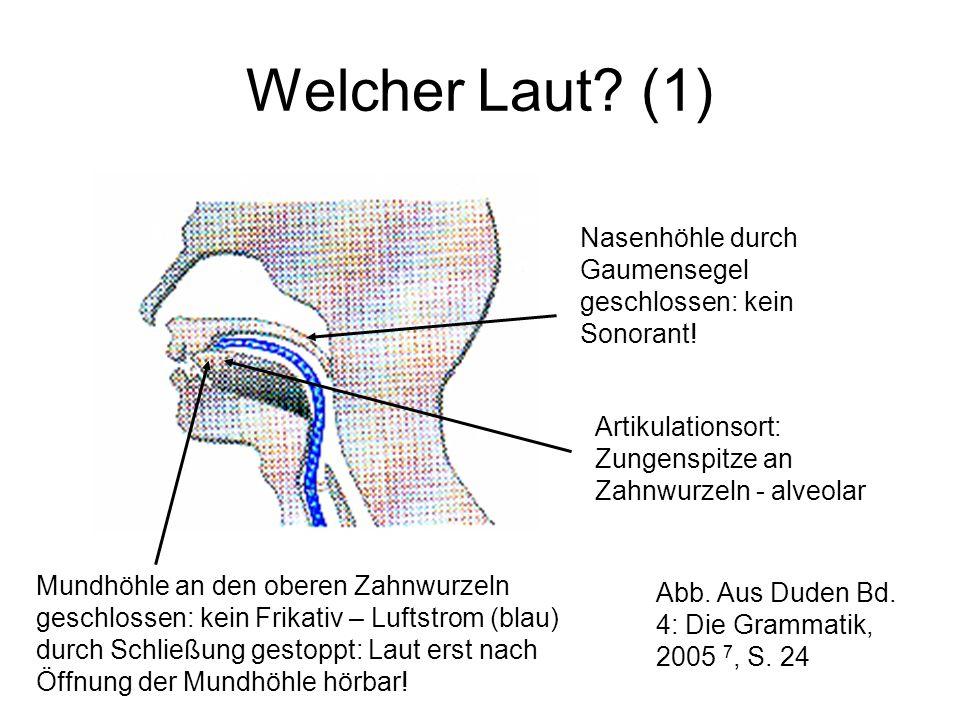 Welcher Laut? (1) Nasenhöhle durch Gaumensegel geschlossen: kein Sonorant! Mundhöhle an den oberen Zahnwurzeln geschlossen: kein Frikativ – Luftstrom
