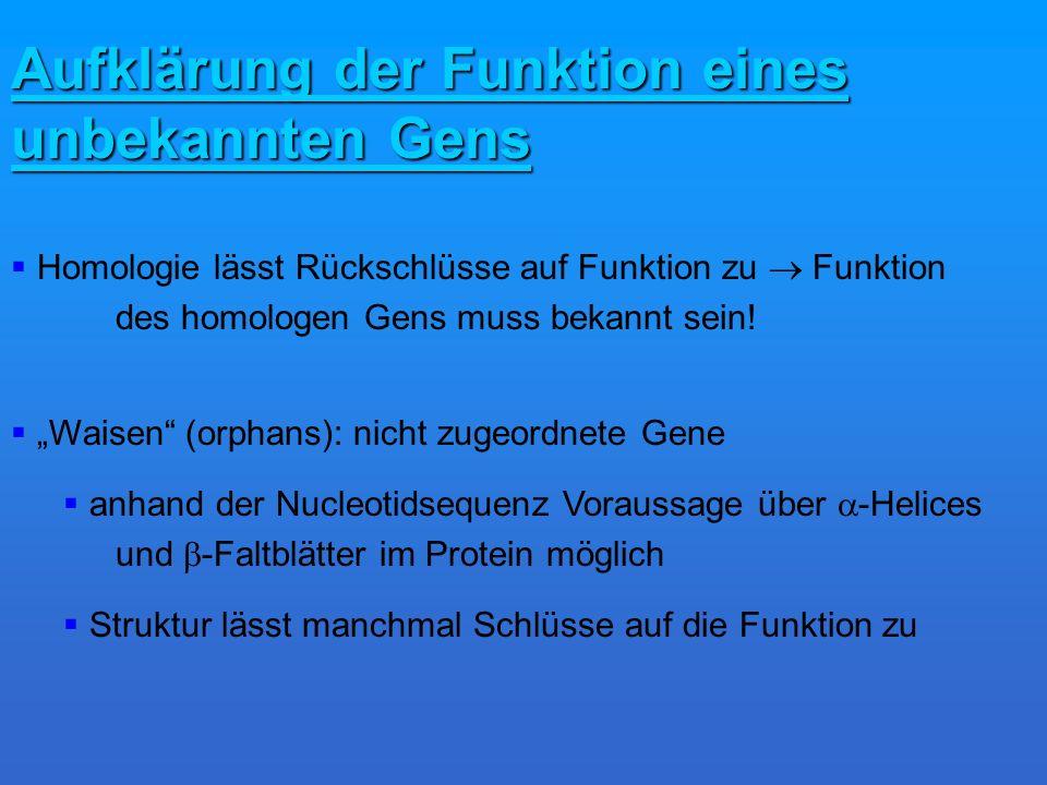 Aufklärung der Funktion eines unbekannten Gens Homologie lässt Rückschlüsse auf Funktion zu Funktion des homologen Gens muss bekannt sein.