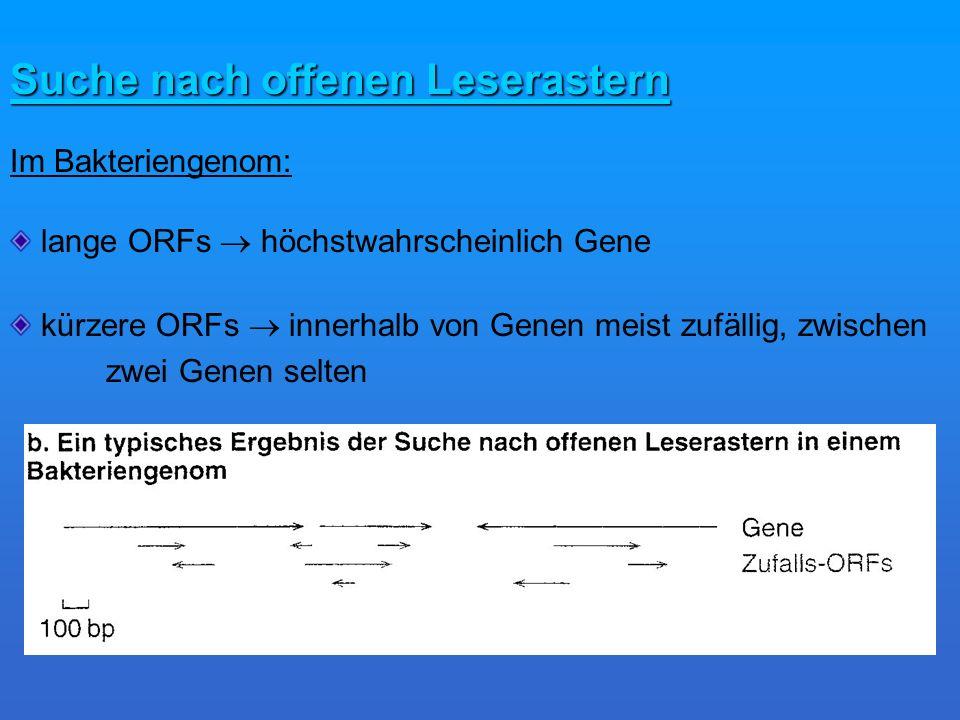 Suche nach offenen Leserastern Im Bakteriengenom: lange ORFs höchstwahrscheinlich Gene kürzere ORFs innerhalb von Genen meist zufällig, zwischen zwei Genen selten