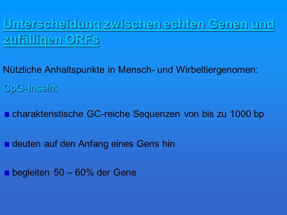 Unterscheidung zwischen echten Genen und zufälligen ORFs Nützliche Anhaltspunkte in Mensch- und Wirbeltiergenomen:CpG-Inseln: charakteristische GC-reiche Sequenzen von bis zu 1000 bp begleiten 50 – 60% der Gene deuten auf den Anfang eines Gens hin