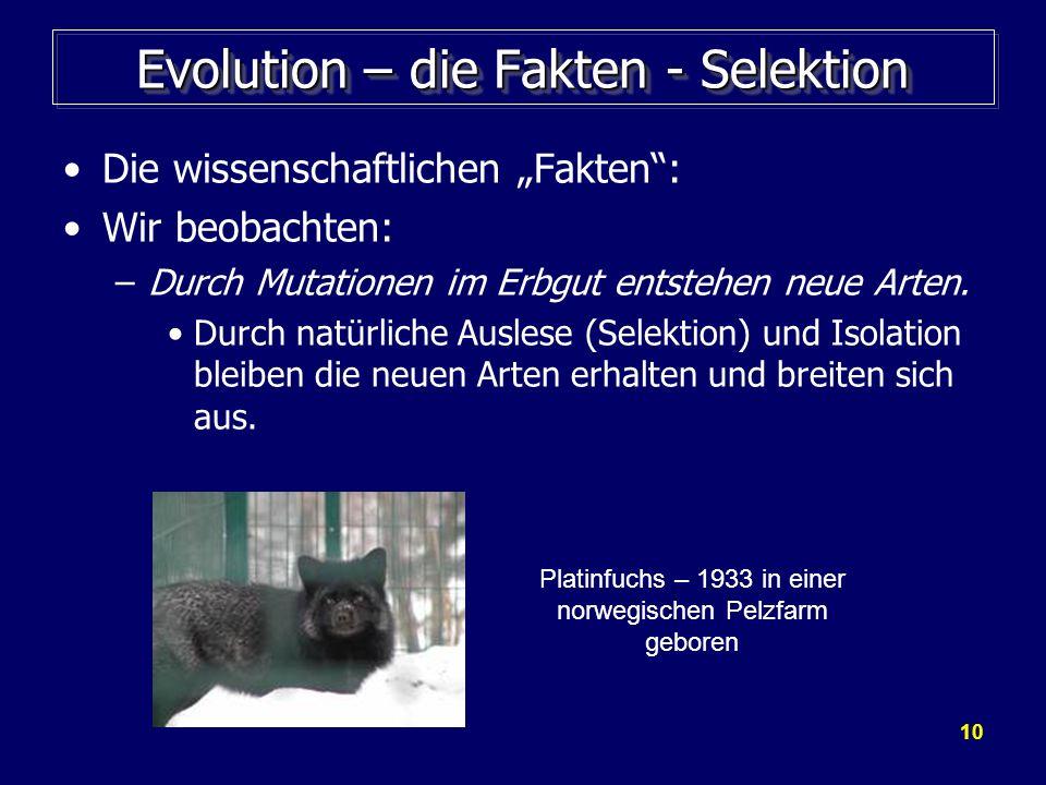 10 Evolution – die Fakten - Selektion Die wissenschaftlichen Fakten: Wir beobachten: –Durch Mutationen im Erbgut entstehen neue Arten. Durch natürlich