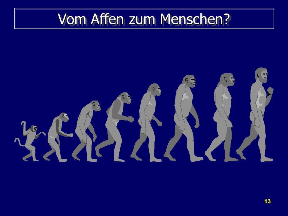 13 Vom Affen zum Menschen?