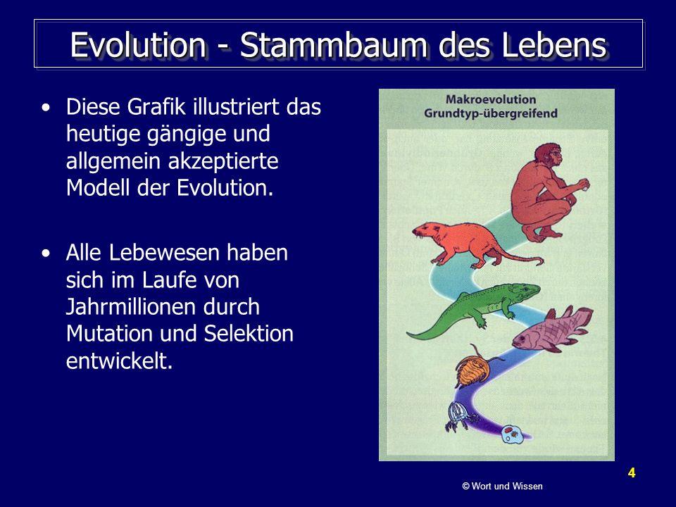 4 Evolution - Stammbaum des Lebens Diese Grafik illustriert das heutige gängige und allgemein akzeptierte Modell der Evolution. Alle Lebewesen haben s