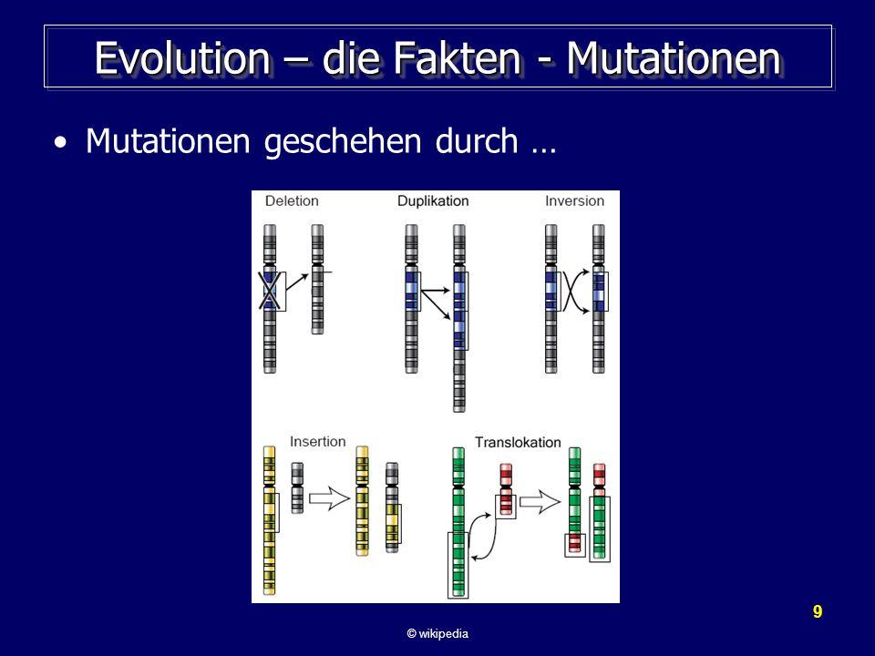 10 Evolution – die Fakten - Selektion Die wissenschaftlichen Fakten: Wir beobachten: –Durch Mutationen im Erbgut entstehen neue Arten.