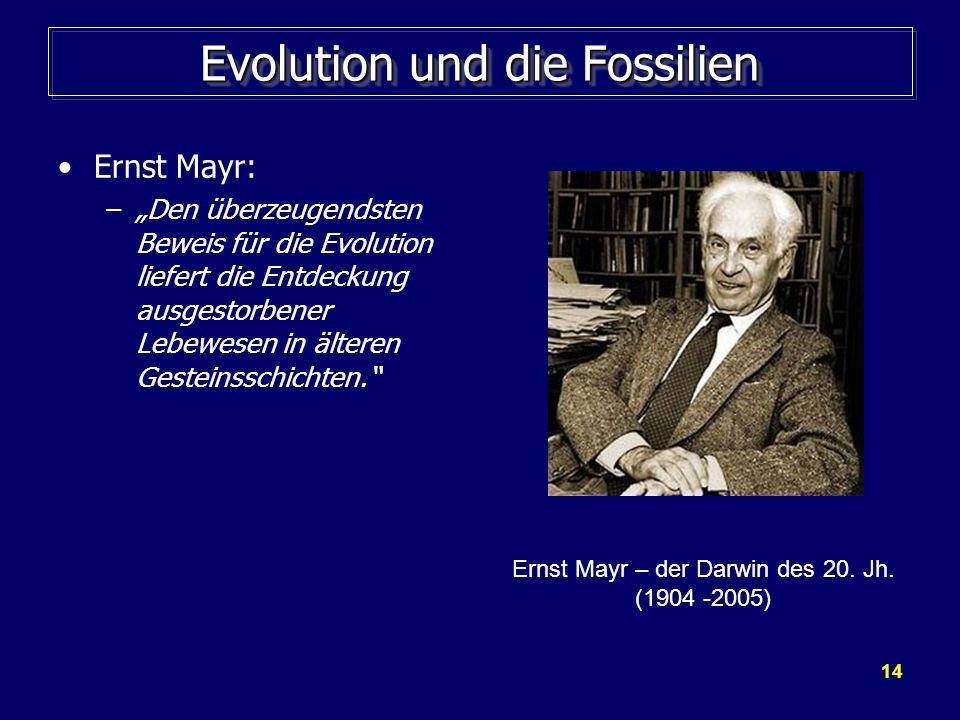 14 Evolution und die Fossilien Ernst Mayr: –Den überzeugendsten Beweis für die Evolution liefert die Entdeckung ausgestorbener Lebewesen in älteren Ge
