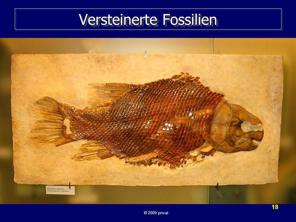 18 Versteinerte Fossilien © 2009 privat