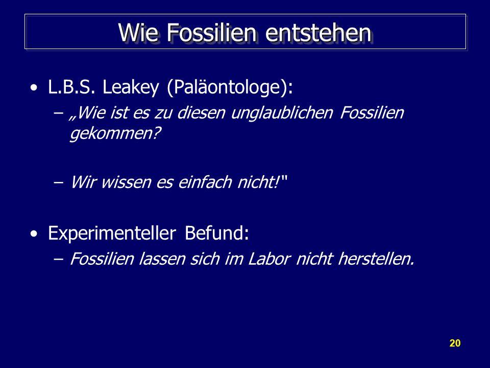 20 Wie Fossilien entstehen L.B.S. Leakey (Paläontologe): –Wie ist es zu diesen unglaublichen Fossilien gekommen? –Wir wissen es einfach nicht! Experim