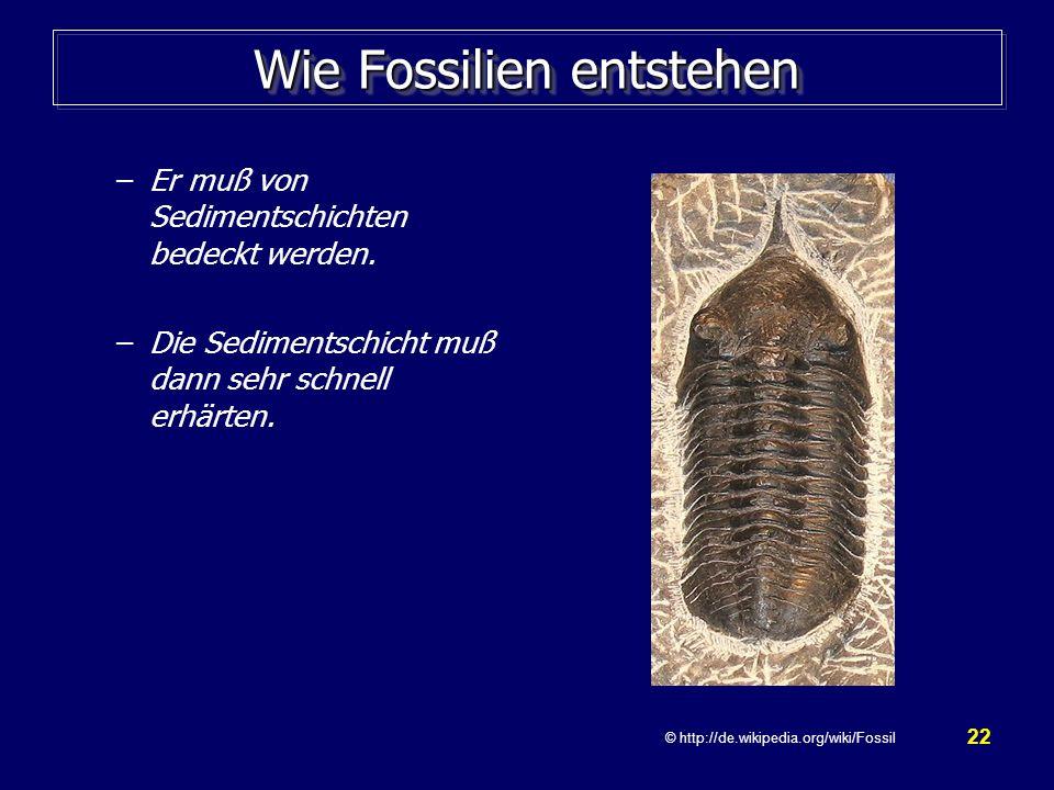 22 Wie Fossilien entstehen –Er muß von Sedimentschichten bedeckt werden. –Die Sedimentschicht muß dann sehr schnell erhärten. © http://de.wikipedia.or