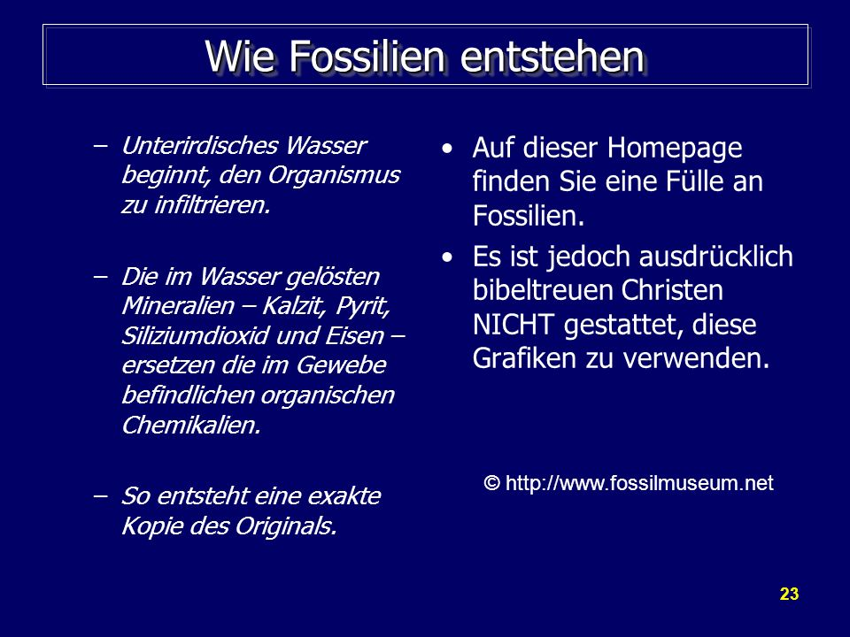 23 Wie Fossilien entstehen –Unterirdisches Wasser beginnt, den Organismus zu infiltrieren. –Die im Wasser gelösten Mineralien – Kalzit, Pyrit, Siliziu