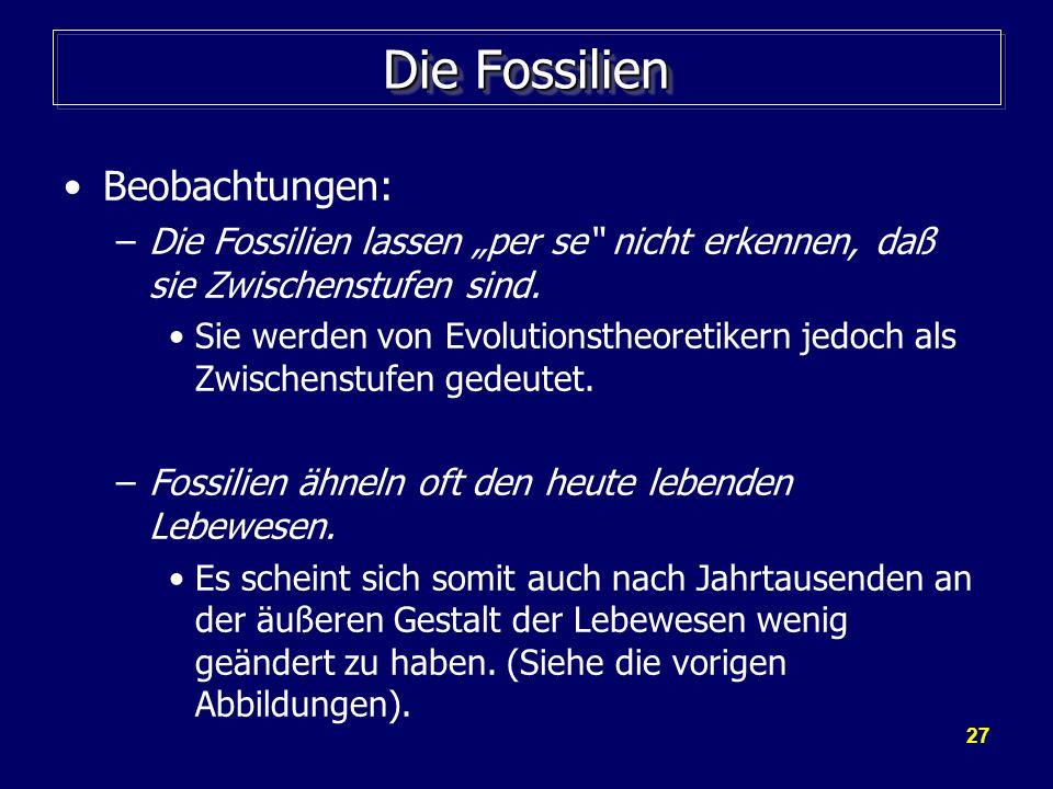 27 Die Fossilien Beobachtungen: –Die Fossilien lassen per se nicht erkennen, daß sie Zwischenstufen sind. Sie werden von Evolutionstheoretikern jedoch