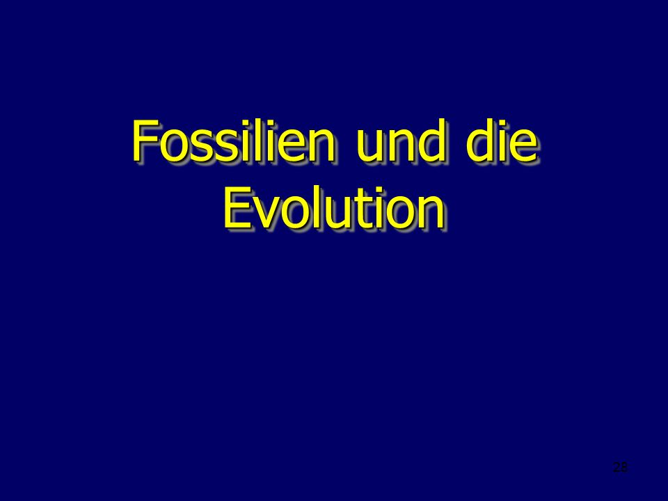 28 Fossilien und die Evolution