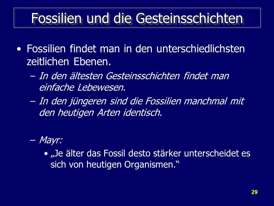 29 Fossilien und die Gesteinsschichten Fossilien findet man in den unterschiedlichsten zeitlichen Ebenen. –In den ältesten Gesteinsschichten findet ma