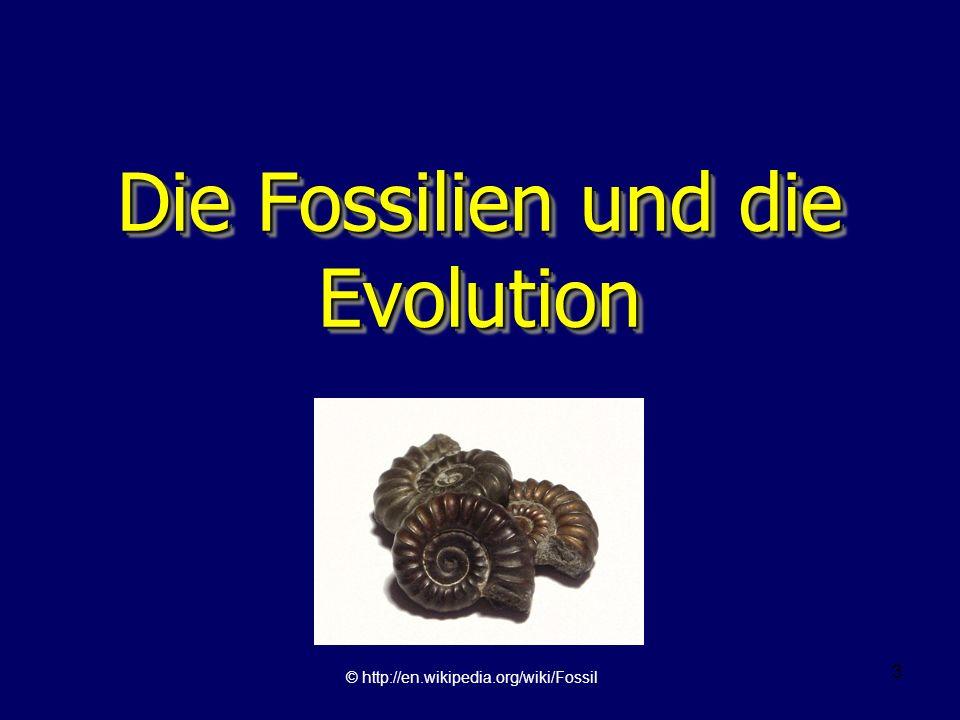 14 Evolution und die Fossilien Ernst Mayr: –Den überzeugendsten Beweis für die Evolution liefert die Entdeckung ausgestorbener Lebewesen in älteren Gesteinsschichten.