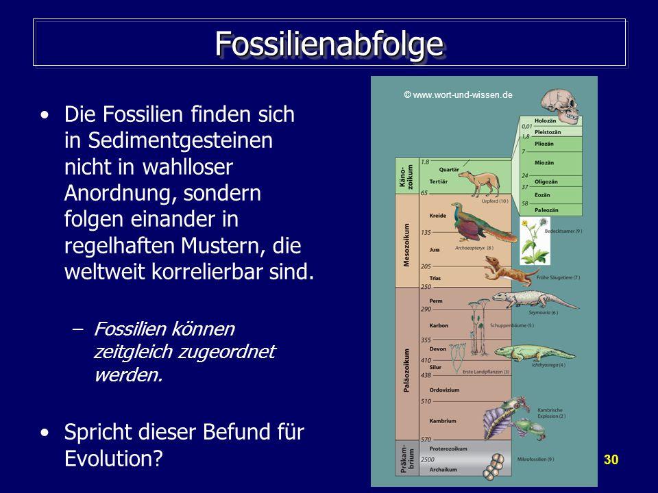 30 FossilienabfolgeFossilienabfolge Die Fossilien finden sich in Sedimentgesteinen nicht in wahlloser Anordnung, sondern folgen einander in regelhafte