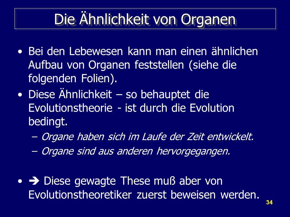 34 Die Ähnlichkeit von Organen Bei den Lebewesen kann man einen ähnlichen Aufbau von Organen feststellen (siehe die folgenden Folien). Diese Ähnlichke