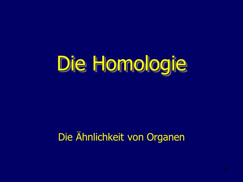 36 Die Homologie Die Ähnlichkeit von Organen