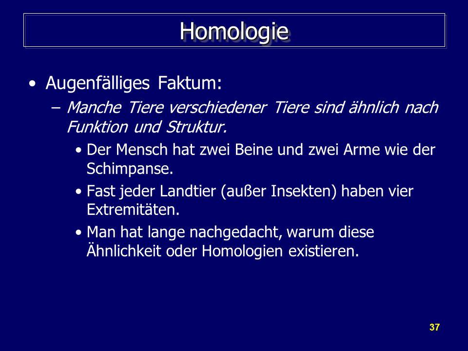 37 HomologieHomologie Augenfälliges Faktum: –Manche Tiere verschiedener Tiere sind ähnlich nach Funktion und Struktur. Der Mensch hat zwei Beine und z
