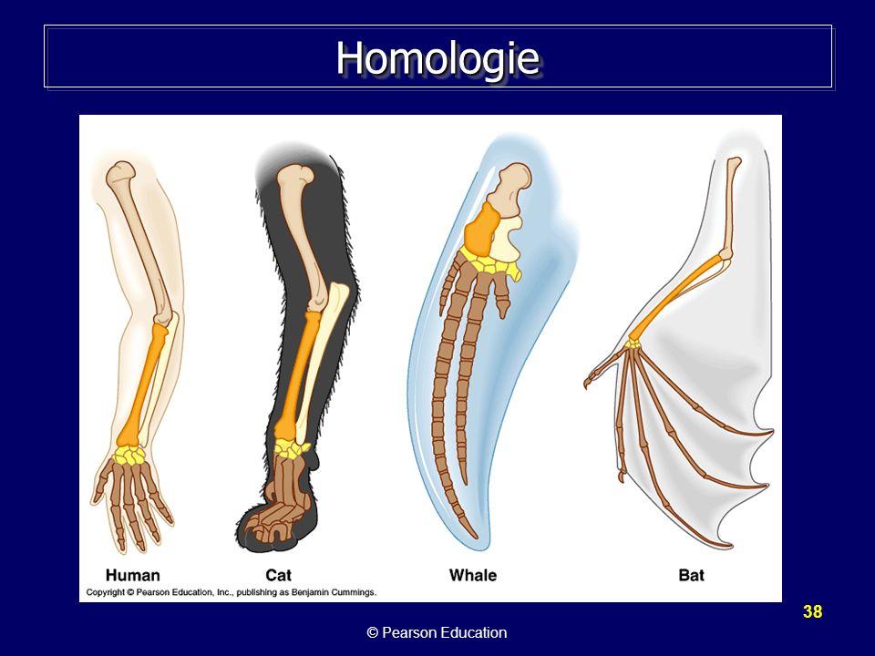 38 HomologieHomologie © Pearson Education