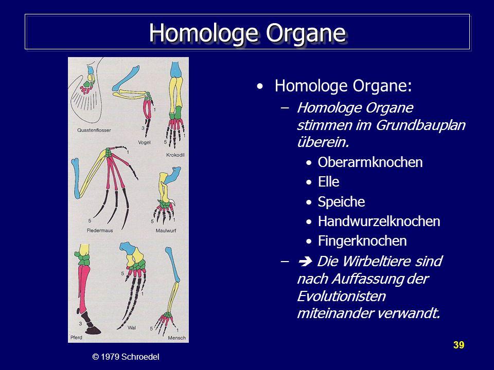 39 Homologe Organe Homologe Organe: –Homologe Organe stimmen im Grundbauplan überein. Oberarmknochen Elle Speiche Handwurzelknochen Fingerknochen – Di
