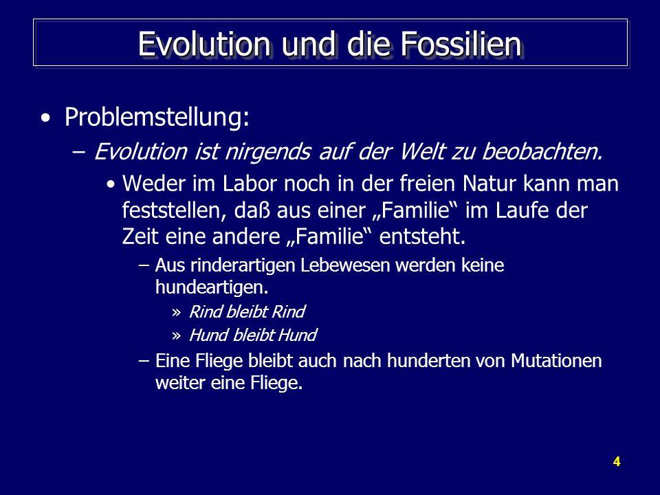 4 Evolution und die Fossilien Problemstellung: –Evolution ist nirgends auf der Welt zu beobachten. Weder im Labor noch in der freien Natur kann man fe