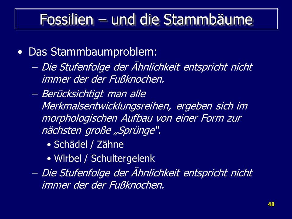 48 Fossilien – und die Stammbäume Das Stammbaumproblem: –Die Stufenfolge der Ähnlichkeit entspricht nicht immer der der Fußknochen. –Berücksichtigt ma