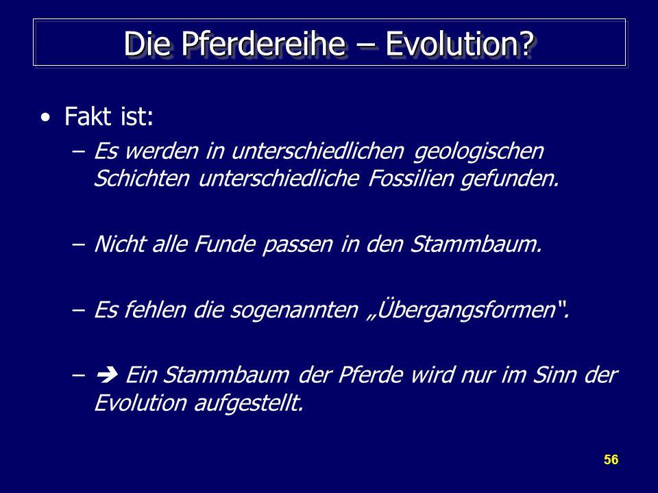 56 Die Pferdereihe – Evolution? Fakt ist: –Es werden in unterschiedlichen geologischen Schichten unterschiedliche Fossilien gefunden. –Nicht alle Fund