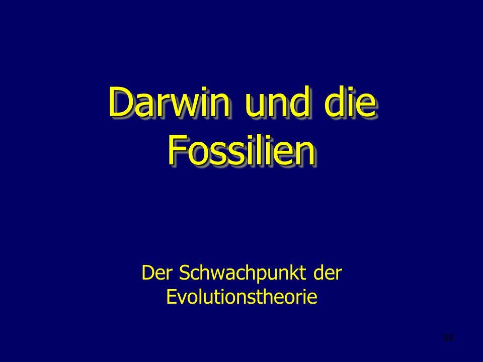 58 Darwin und die Fossilien Der Schwachpunkt der Evolutionstheorie