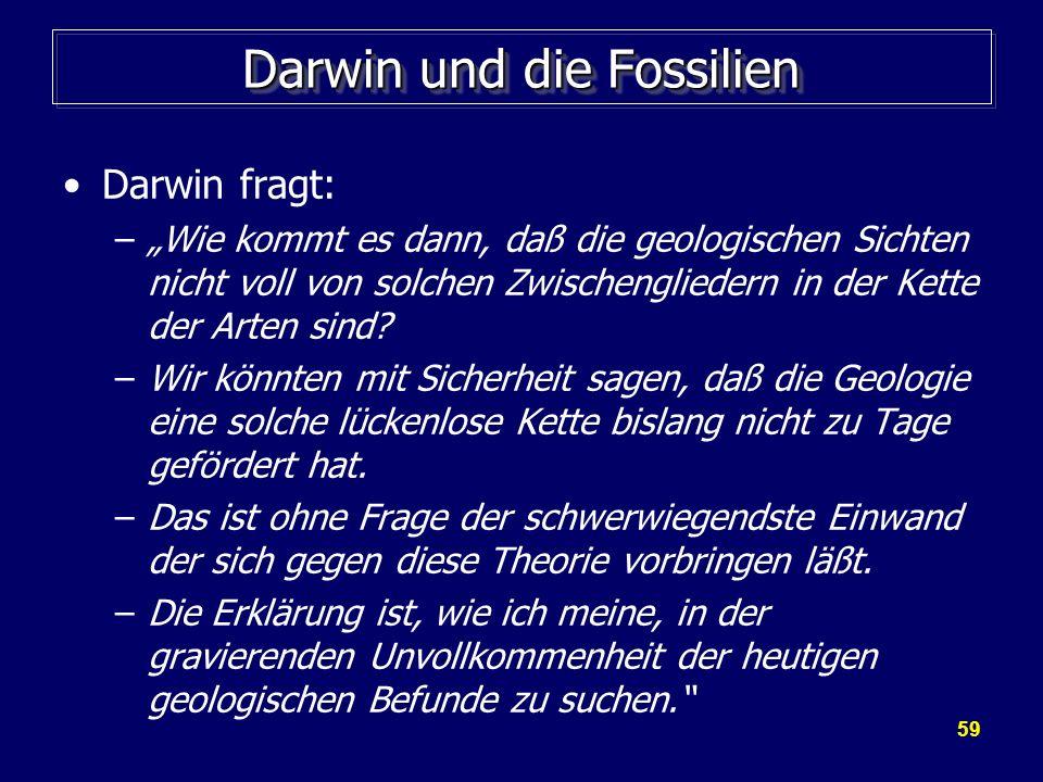59 Darwin und die Fossilien Darwin fragt: –Wie kommt es dann, daß die geologischen Sichten nicht voll von solchen Zwischengliedern in der Kette der Ar